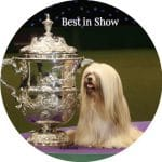 Best in Show Dog Competition Poplar Union Discover Poplar